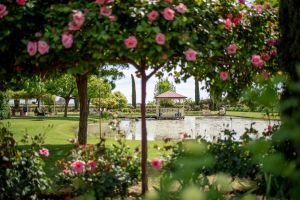 Griffith Spring Fest - Palm Beach Accommodation