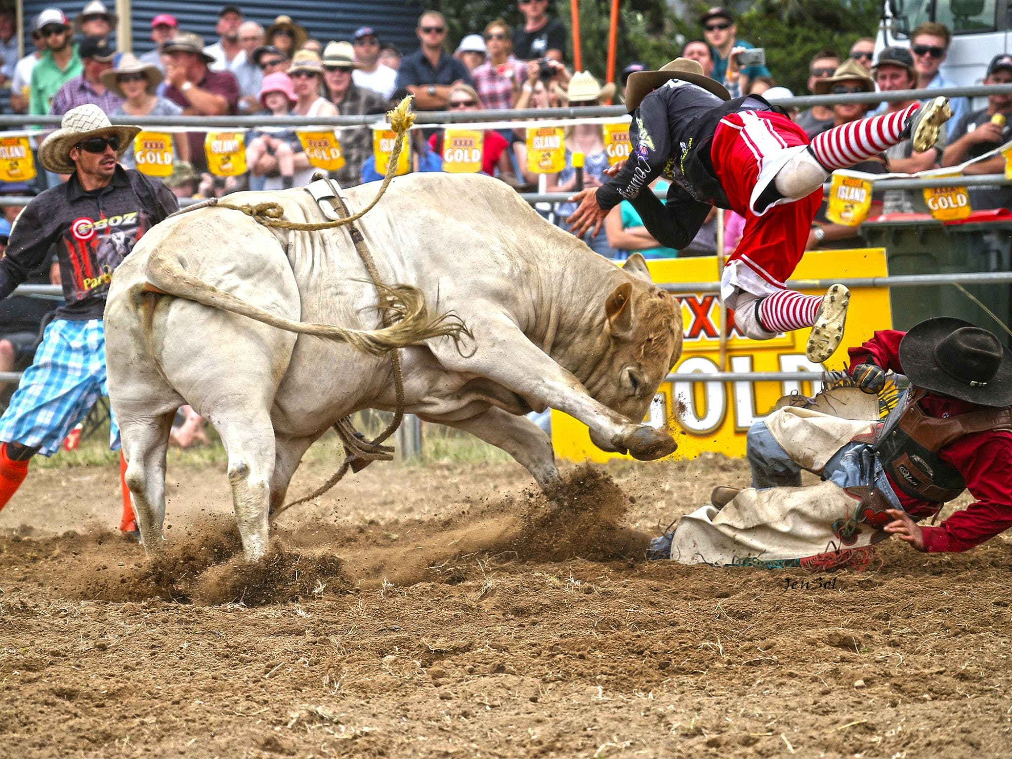 Jindabyne's Man From Snowy River Rodeo - Palm Beach Accommodation