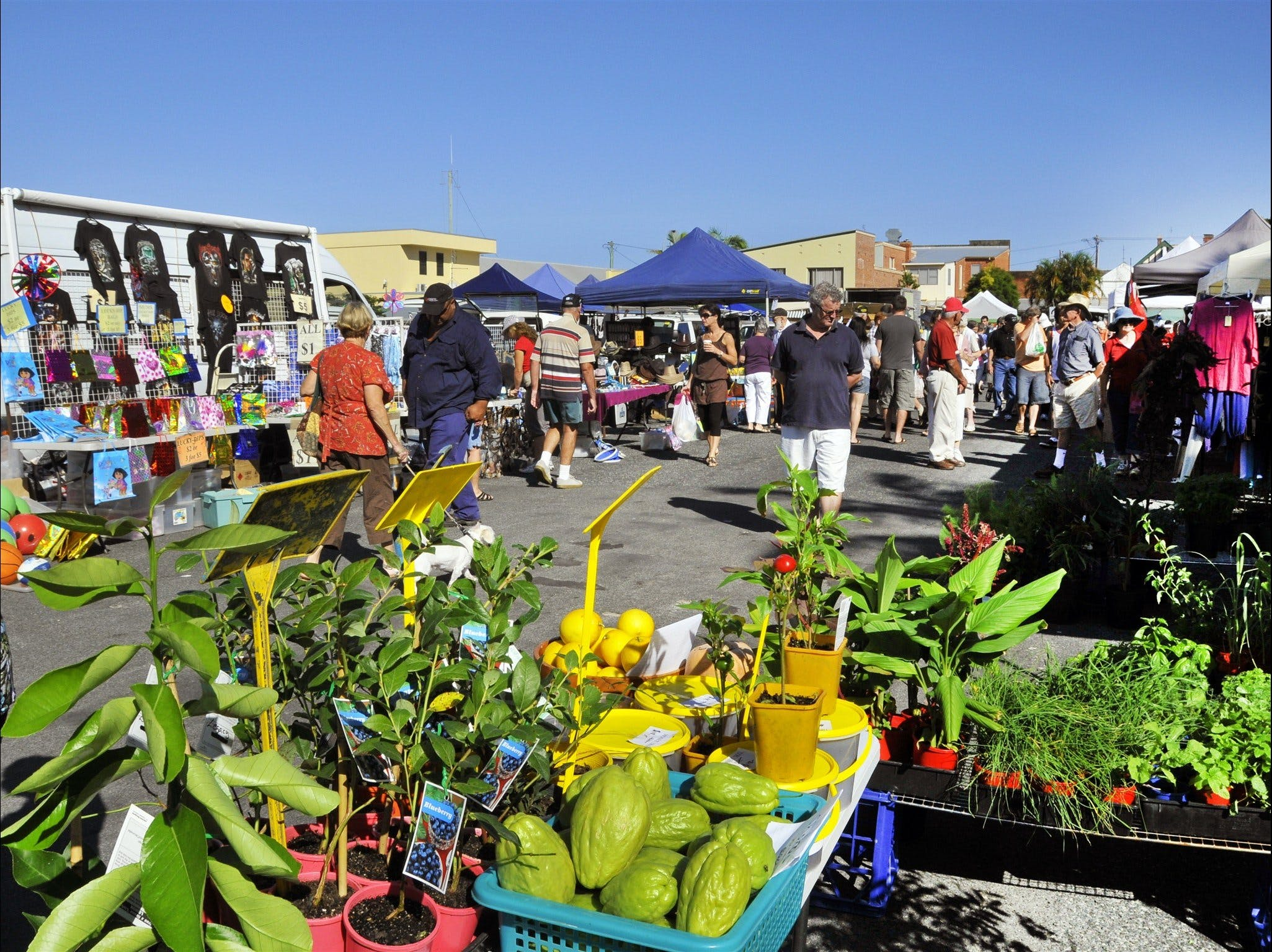 Maclean Community Monthly Markets - Palm Beach Accommodation