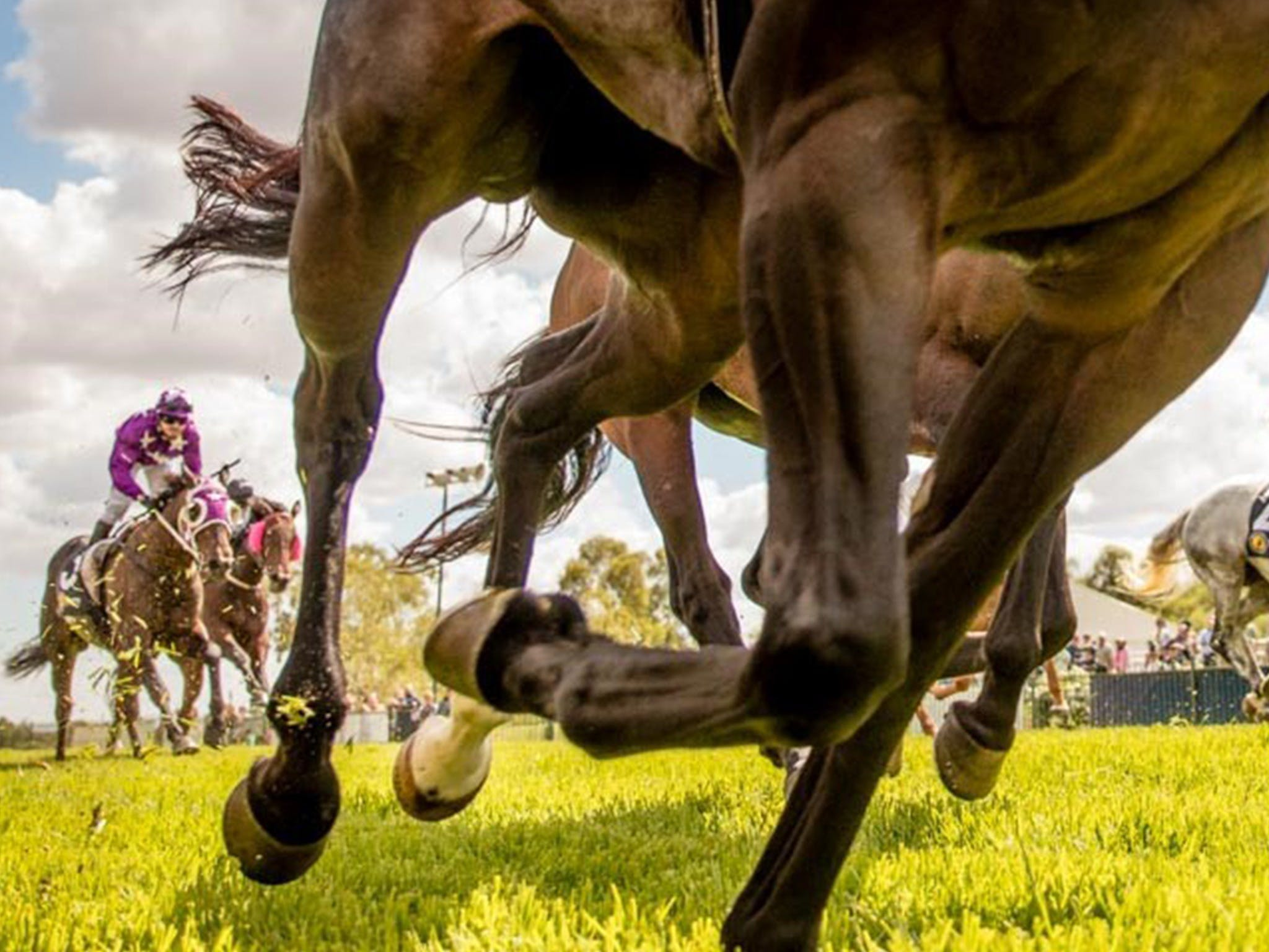 Night Markets and Race Day - Palm Beach Accommodation