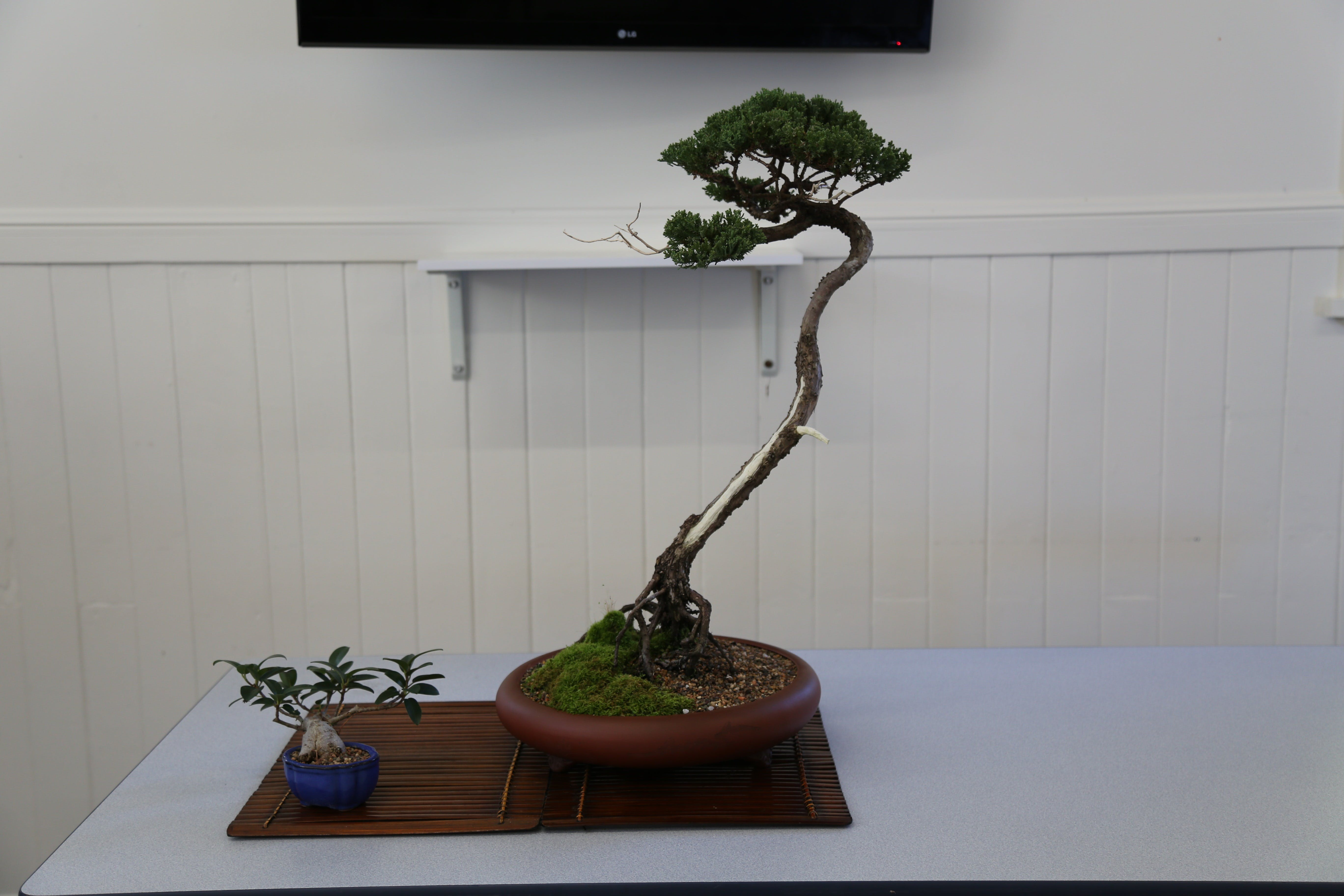Wauchope Bonsai Workshop Group - Palm Beach Accommodation