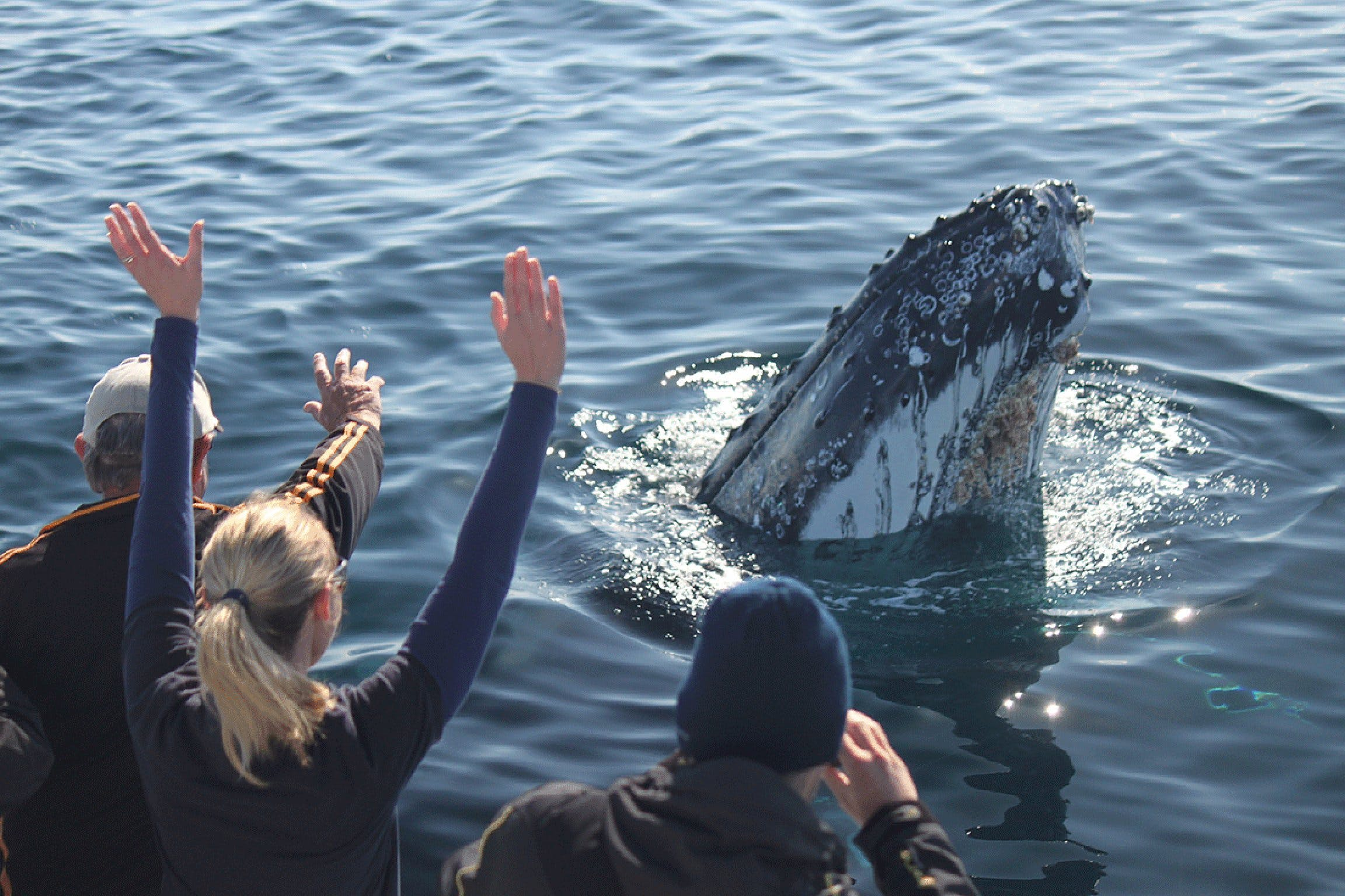 Eden Whale Festival - Palm Beach Accommodation