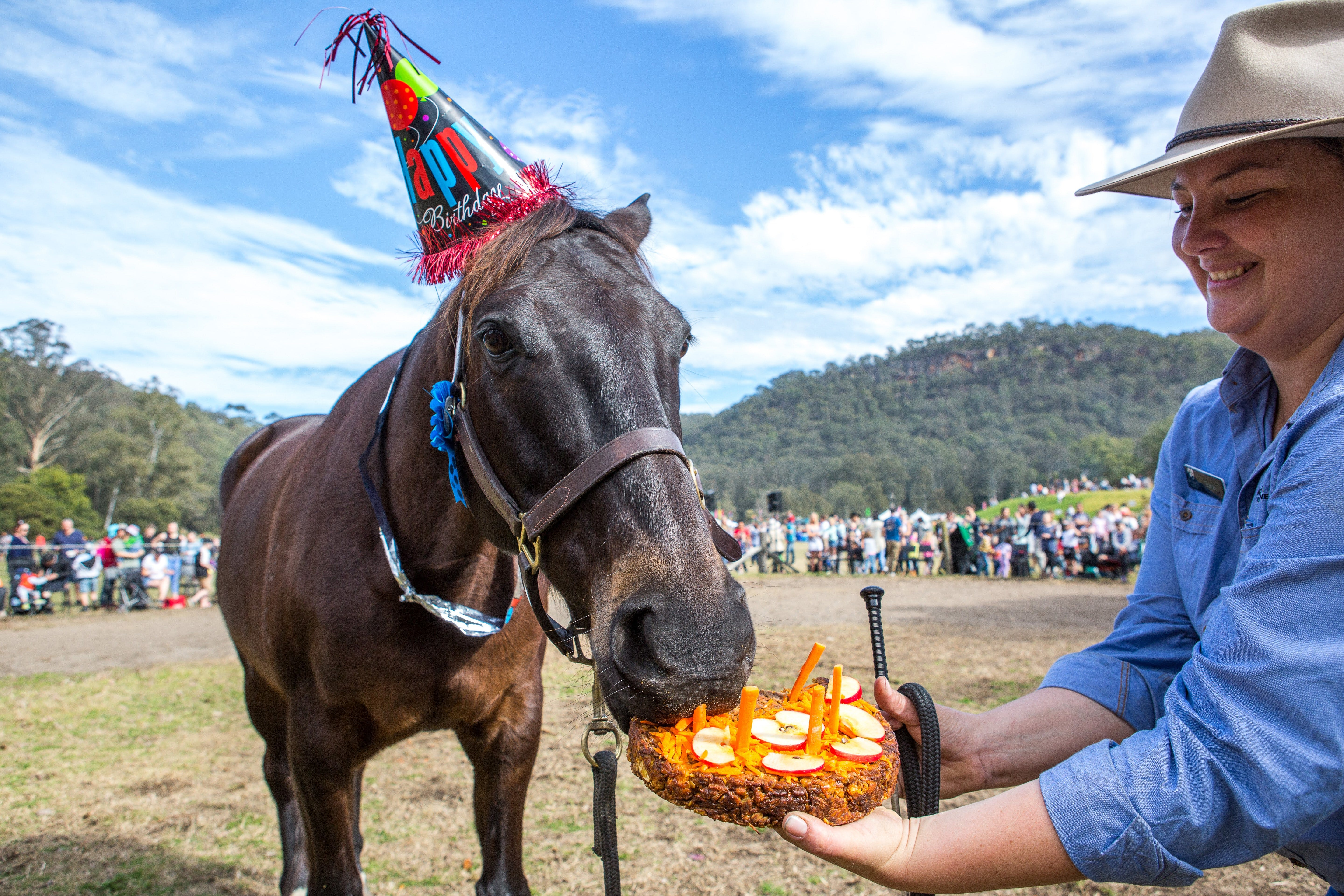 Horses Birthday Festival - Palm Beach Accommodation